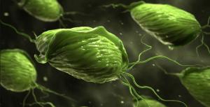 Biểu hiện bệnh viêm âm đạo do trùng roi